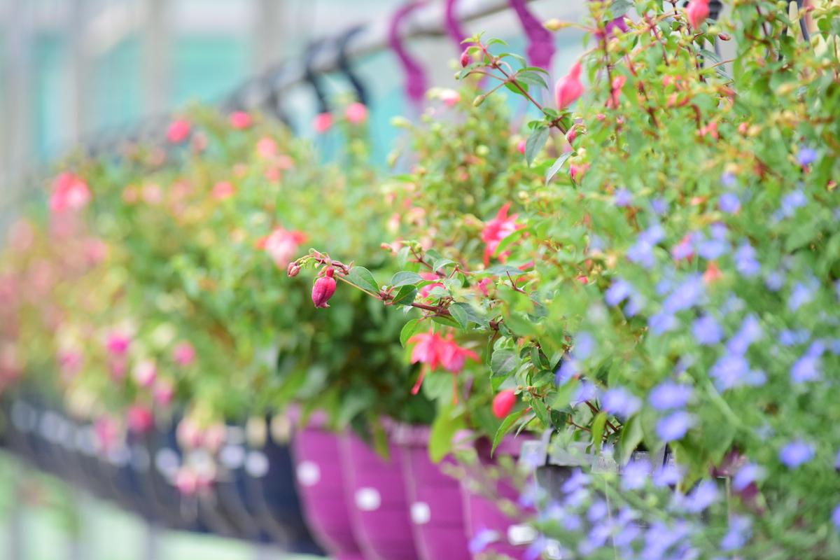 achuurke bloemen en planten hanging basket