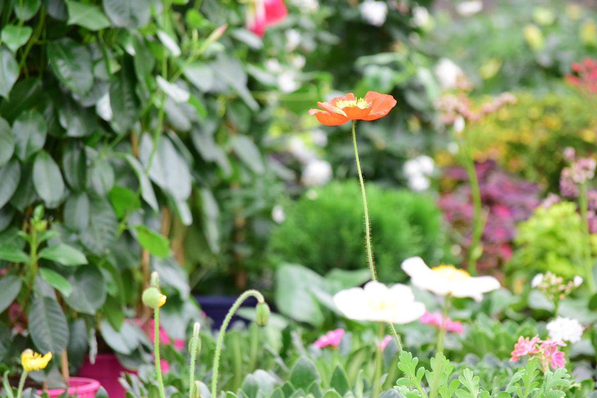 Bloemen bestellen Nuenen 't schuurke